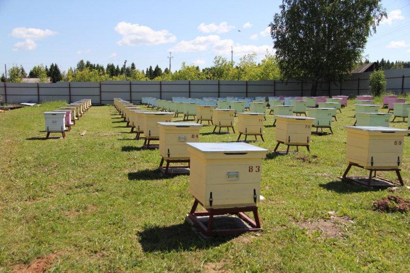 Развитие технологии промышленного пчеловодства
