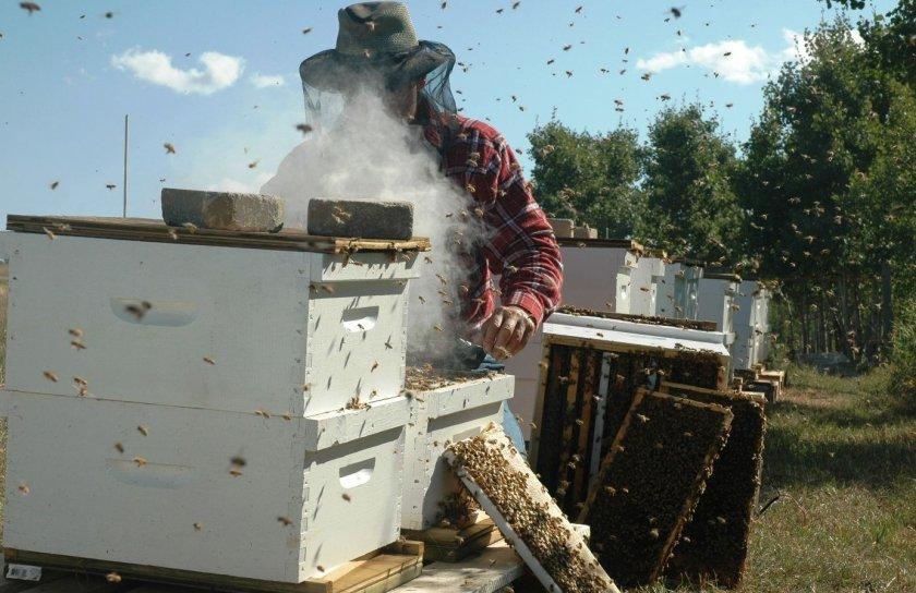 Особенности промышленного пчеловодства