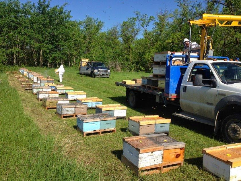 Транспортировка пчелосемей
