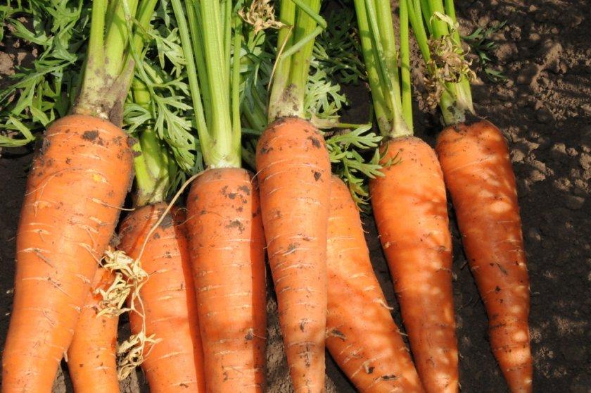 Денверская морковь
