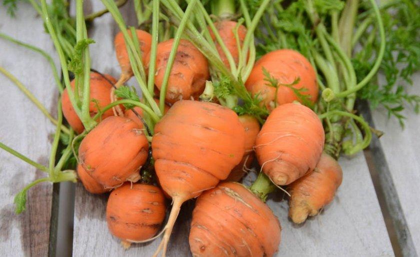 Круглая морковь
