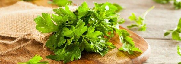 Отвар петрушки для похудения: рецепты настоя