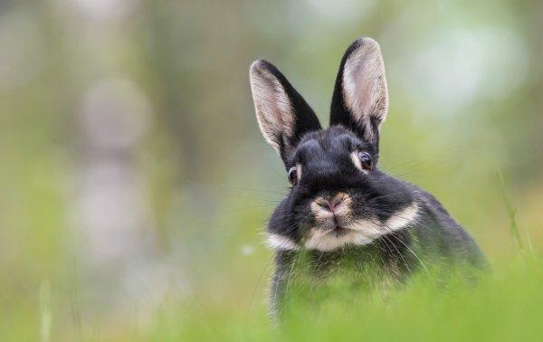 Почему кроликов раздувает