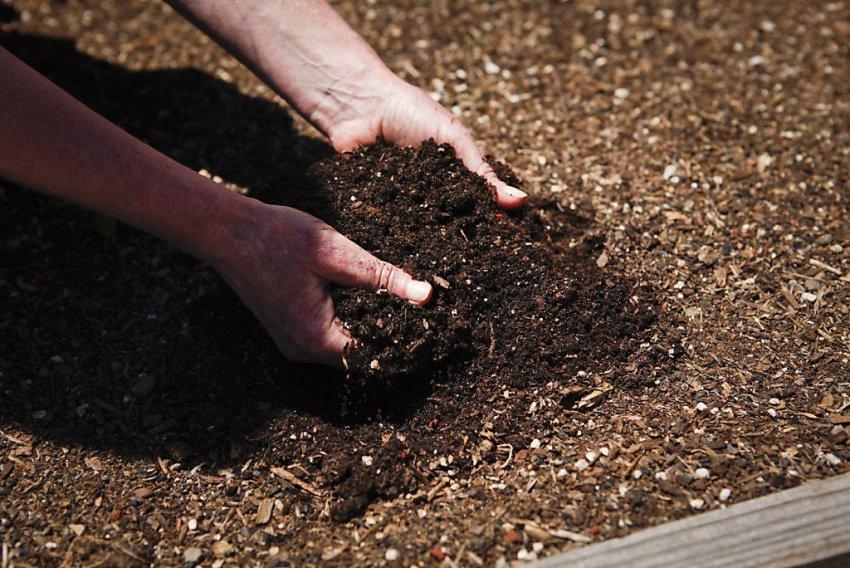 Почва для моркови