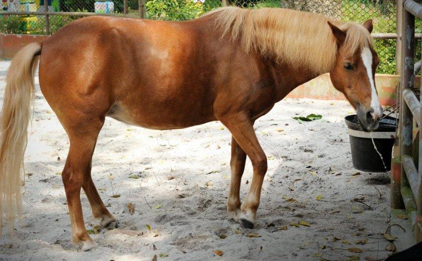 Причины колик у лошадей