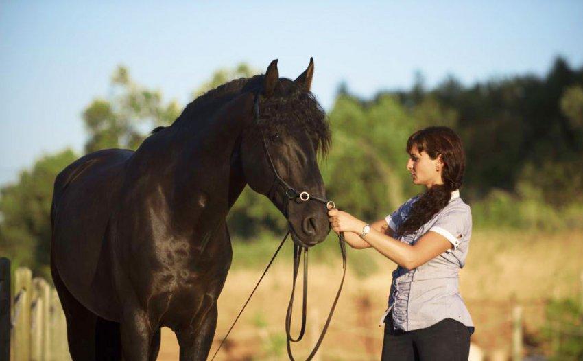 Моцион лошадей