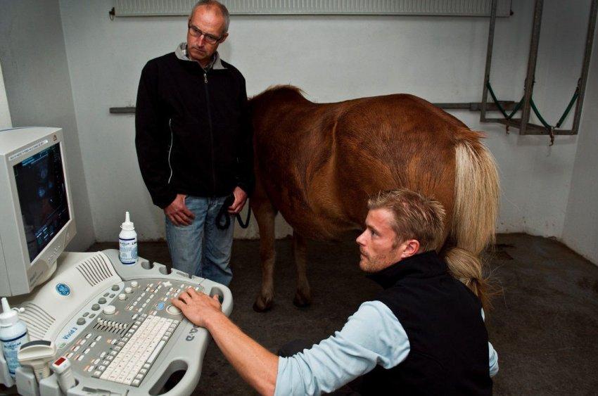 Ультразвуковая диагностика лошадей