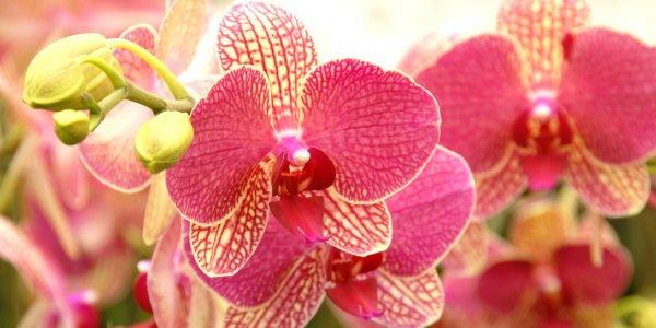 Почему пожелтели листья у орхидеи что делать