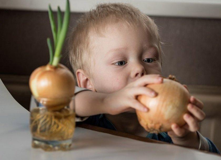 Свойства лука для детей