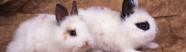 Внезапная смерть кролика и ее причины