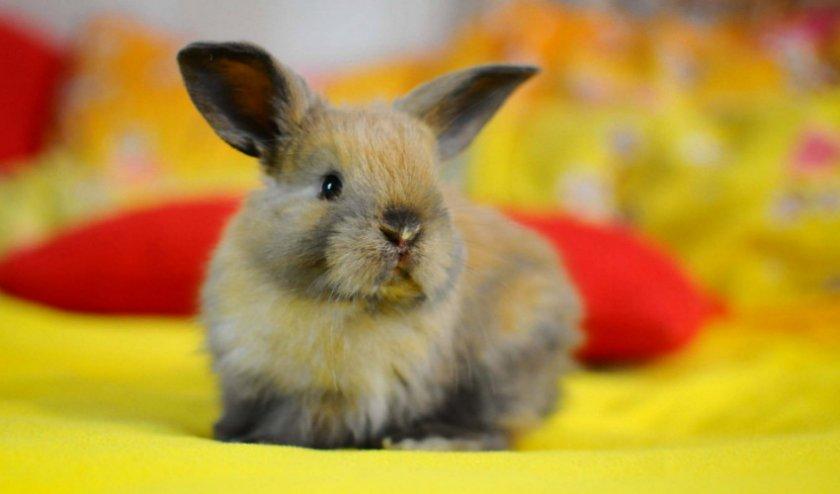 Почему кролики дохнут