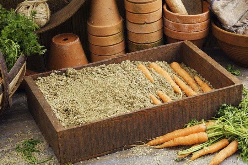Реанимация подмерзшей моркови в песке