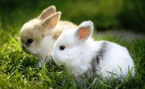 Можно ли кормить кроликов комбикормом?