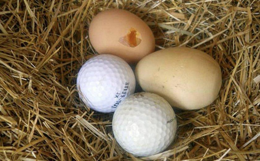 Подкладка фальшивых яиц