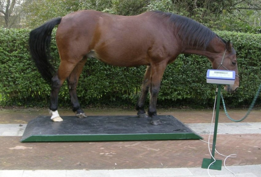Лошадь на весах