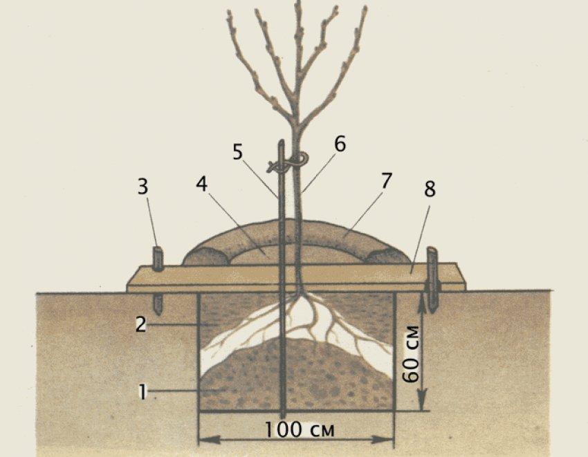 Как подготовить и посадить саженцы на участке