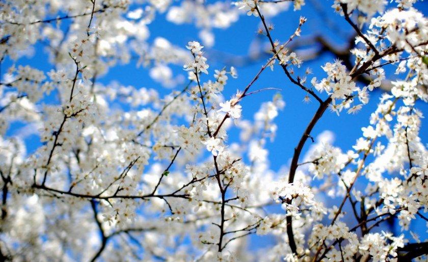 Цветение деревьев в апреле