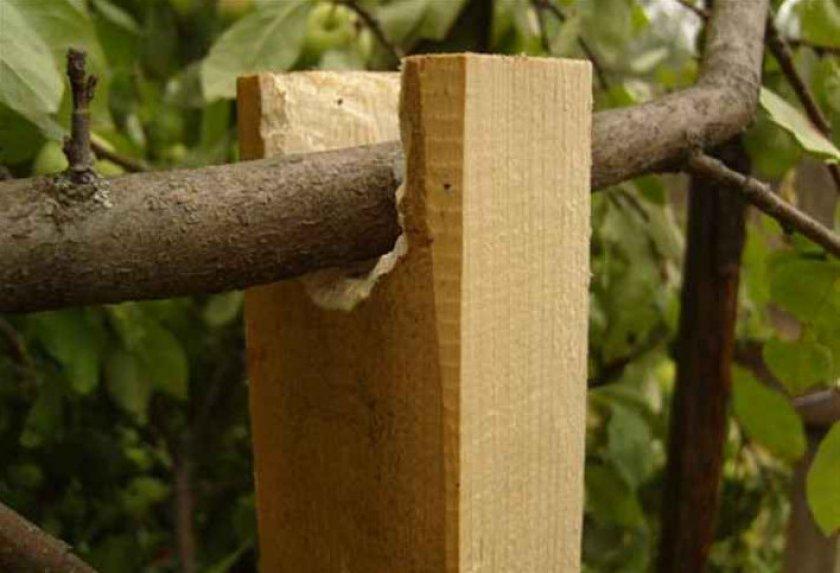 Подпорка сливовых ветвей