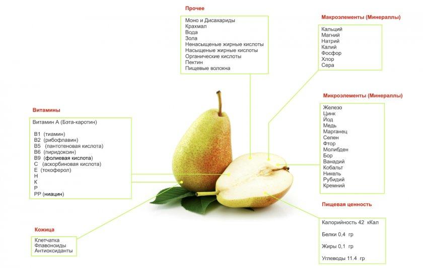 Химический состав и калорийность груши