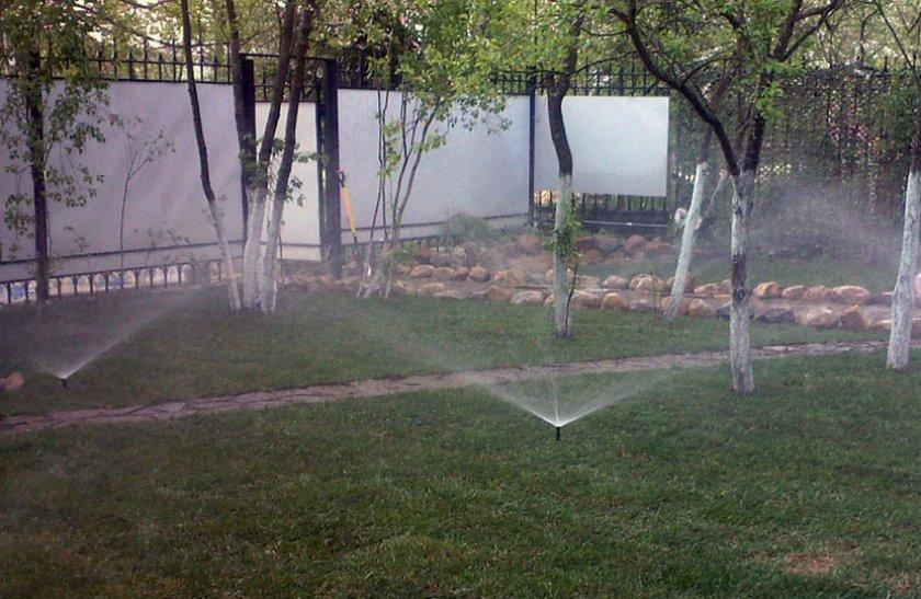 Дождевание слив в саду