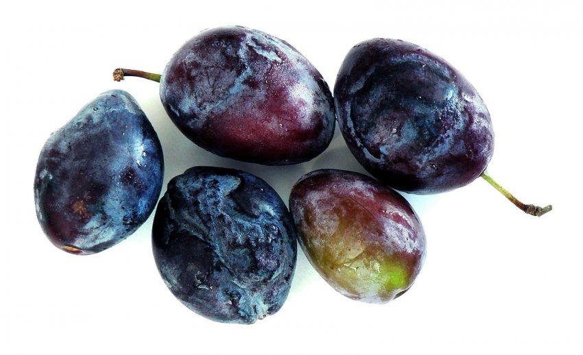 Шарка на плодах слив