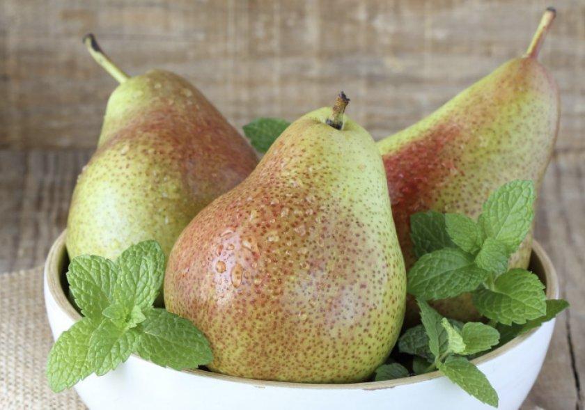 Плоды груши Лесная красавица