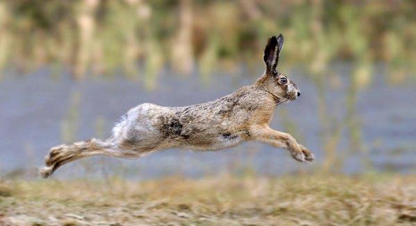 Чем отличается заяц от кролика: разница внешне, фото, скрещивание
