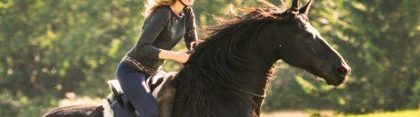 Как выслать лошадь в галоп