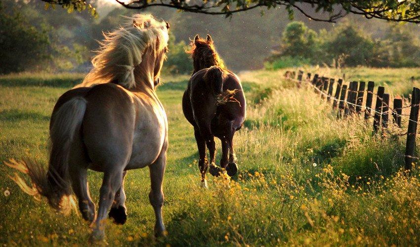 Галоп лошади