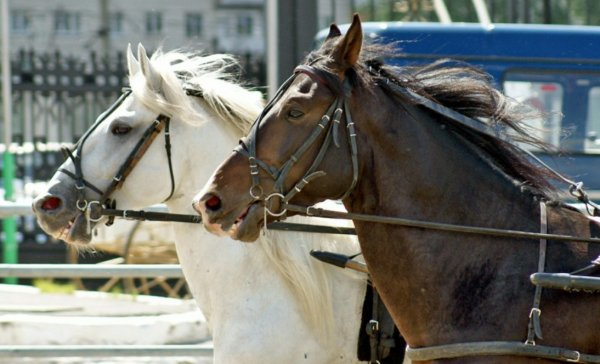 Как сделать верёвочный недоуздок для лошади своими руками: размеры, схема, таблица