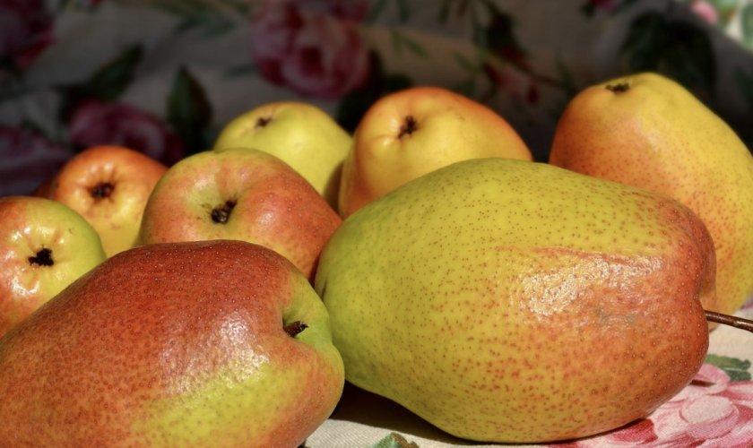Плоды груши Парижанка