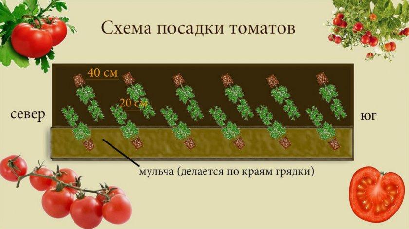Схема высадки томатов в открытый грунт