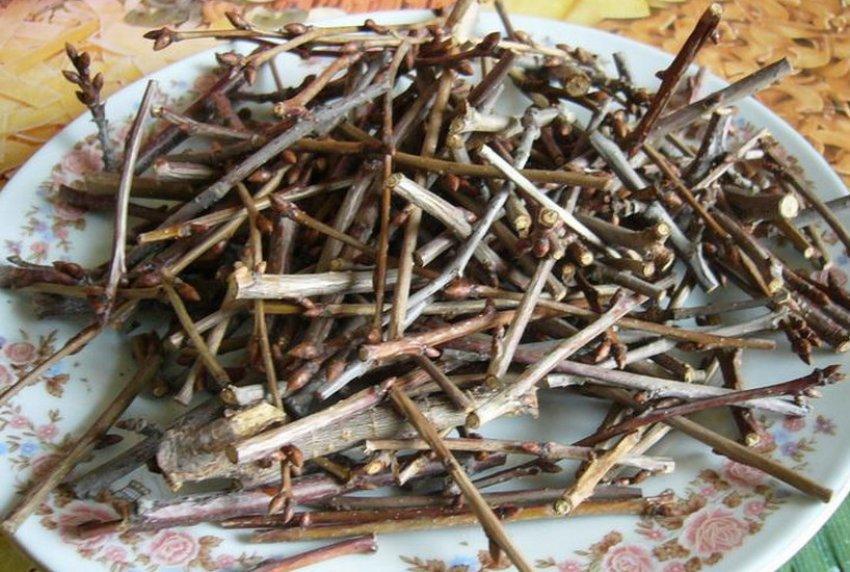 Сушёные вишнёвые ветки