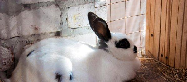 Крольчатник маточник своими руками