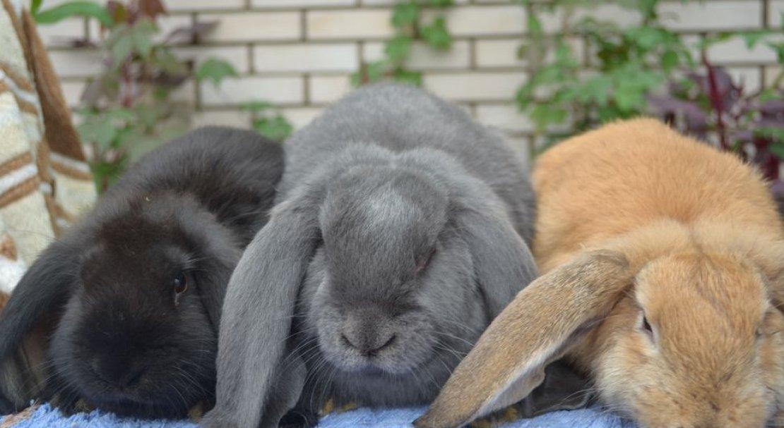 клубный найти кроликов с фото в рязани этим летом