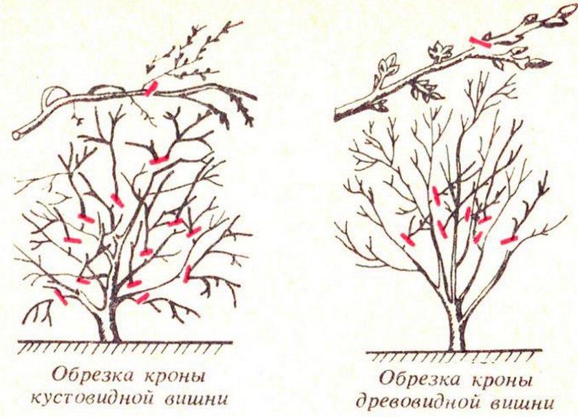 Типы обрезки вишни