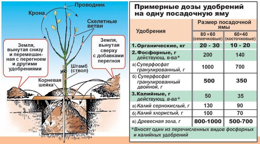 Удобрения на одну посадочную яму