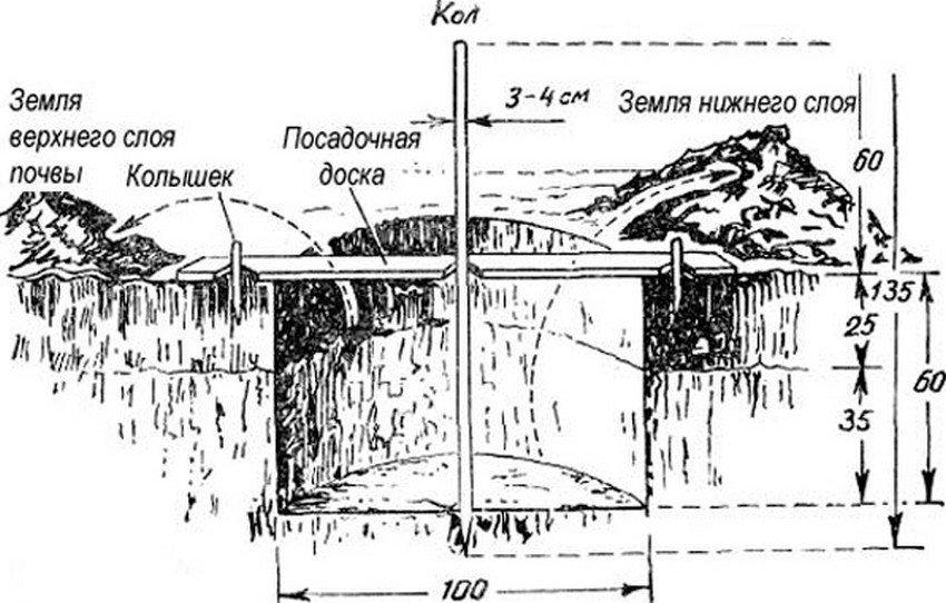 Схема посадки сливы
