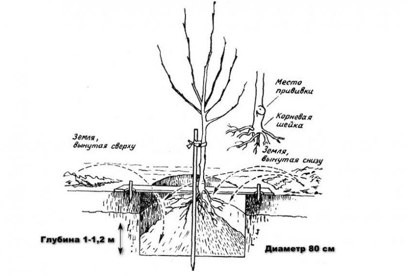 Схема посадочной лунки