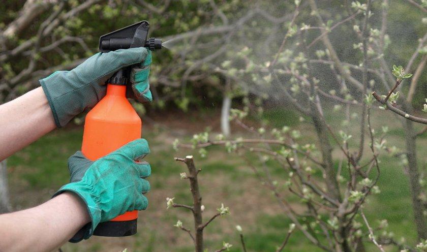 Опрыскивание плодового дерева