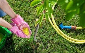 Сорта вишни: описание поздних и ранних разновидностей, виды с самыми сладкими плодами