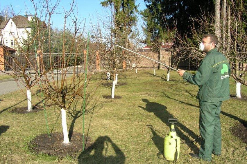 Весеннее опрыскивание дерева