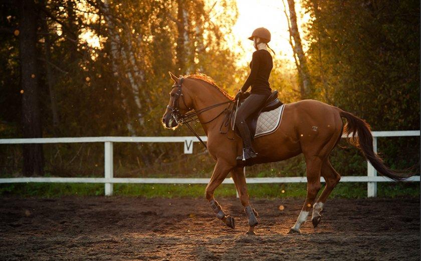 Верховая езда на лошади