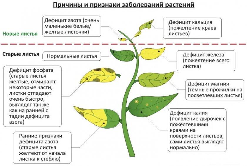 Причины и признаки заболевания листьев