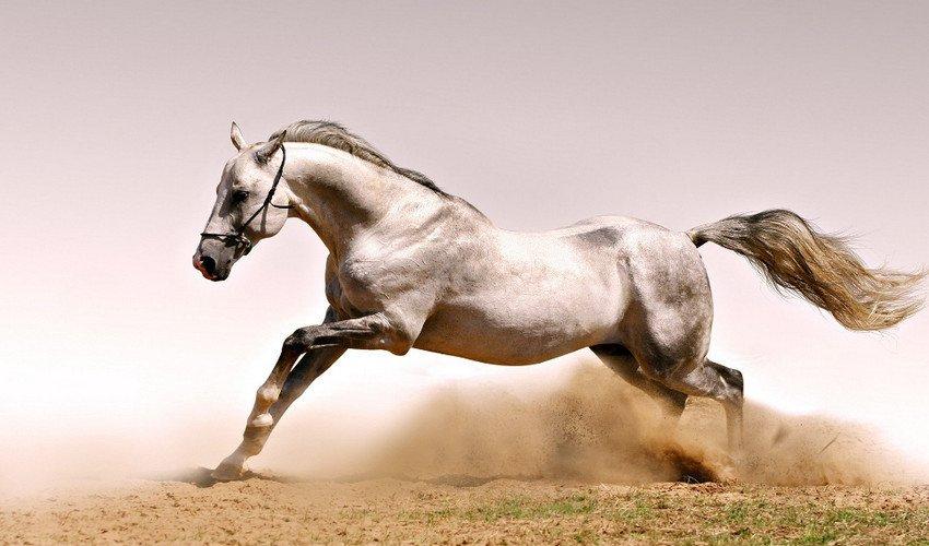 Скорость бега лошади