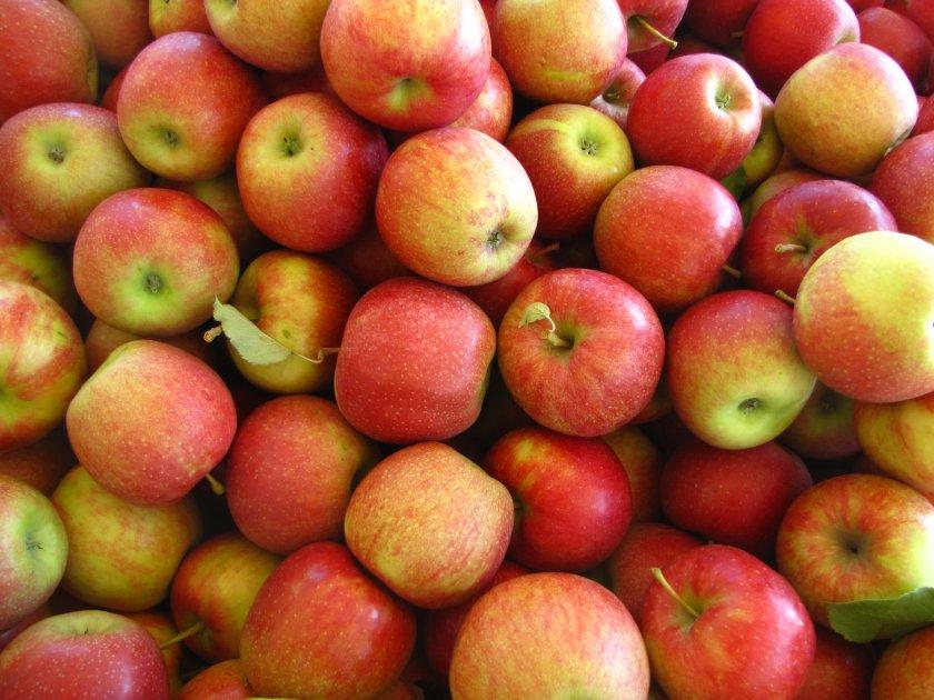 Урожай яблок Джонагоглд