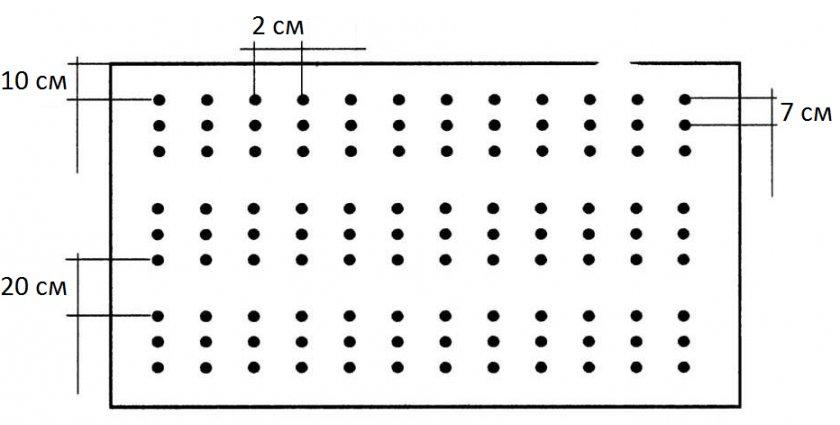 Схема посева лука