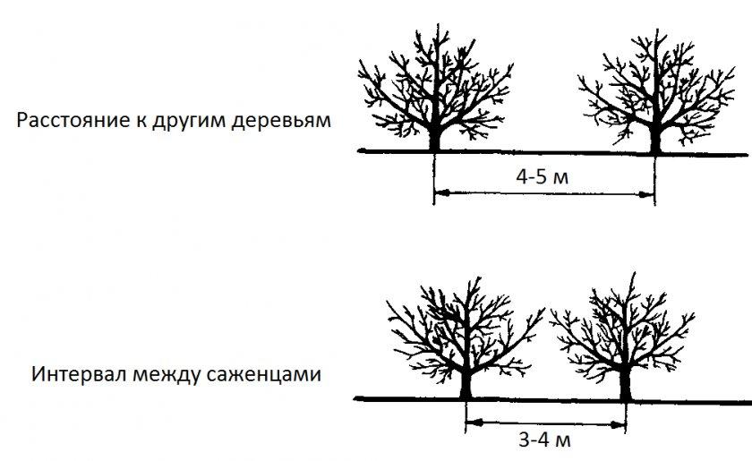 Схема расстояния между посадками