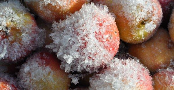 Можно ли замораживать яблоки