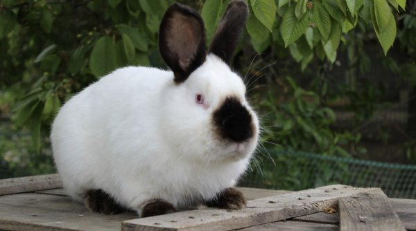 Паразиты у кроликов — симптомы и лечение, как лечить глисты